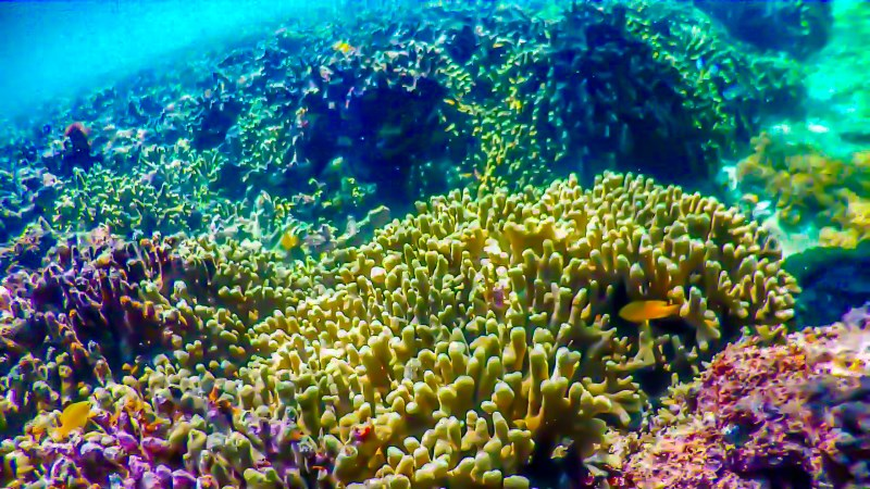 珊瑚礁が広がる海