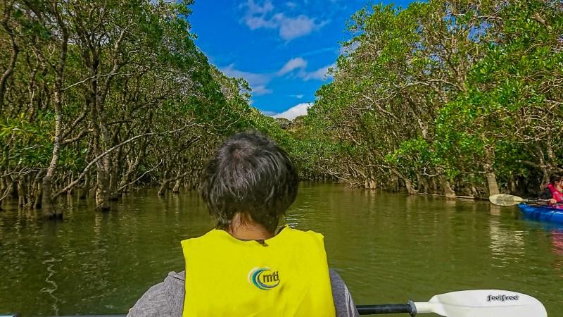 マングローブでカヌーを漕ぐCEO